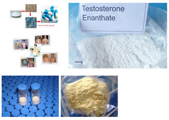 China Primobolan Steroids Powder Methenolone Enanthate CAS 303-42-4 Nandrolone Steroids supplier